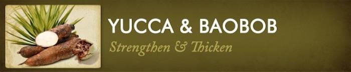 yucca_baobab